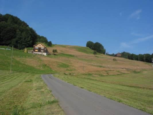 3_Damaged_grass_on_hillside-1