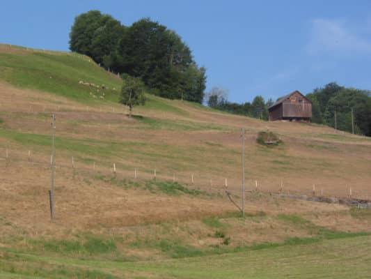 Damaged grass on hillside