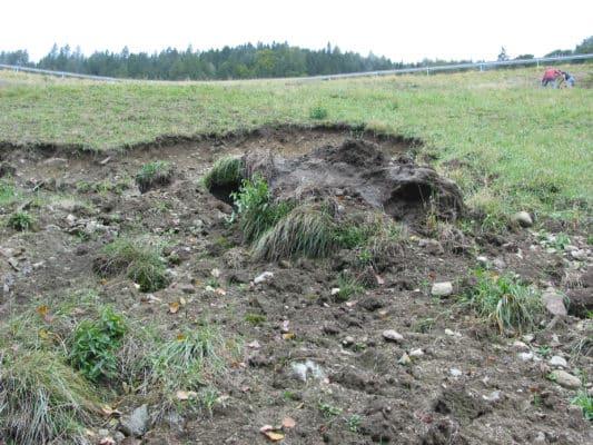 Damaged grass on roadside - 1